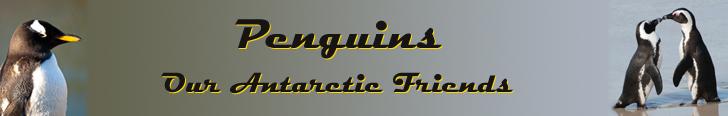 Penguins - Our Antarctic Friends banner