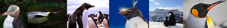 Penguins - Our Antarctic Friends thumbnails