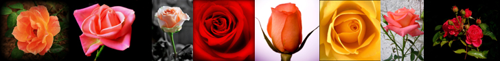 Poses of Roses